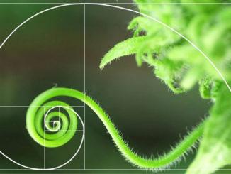 fibonacci series nature