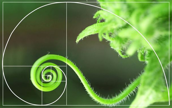 fibonacci series nature